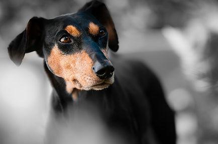 chien_vie_privée.jpg