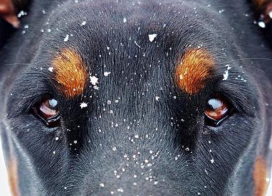 chien yeux neige.jpg