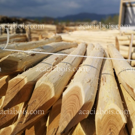 Acacia wood poles, straight from the producer