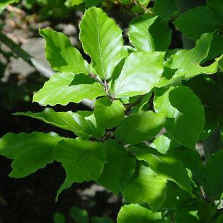 haya_verde_grande.jpg