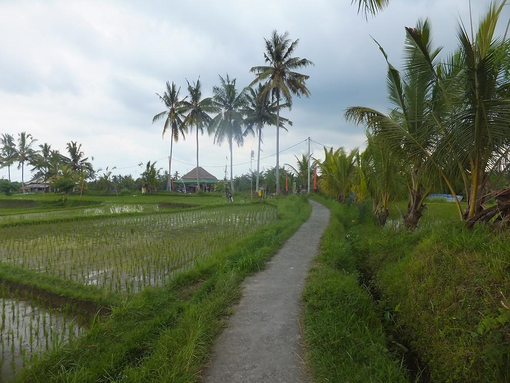 Bali weather in February