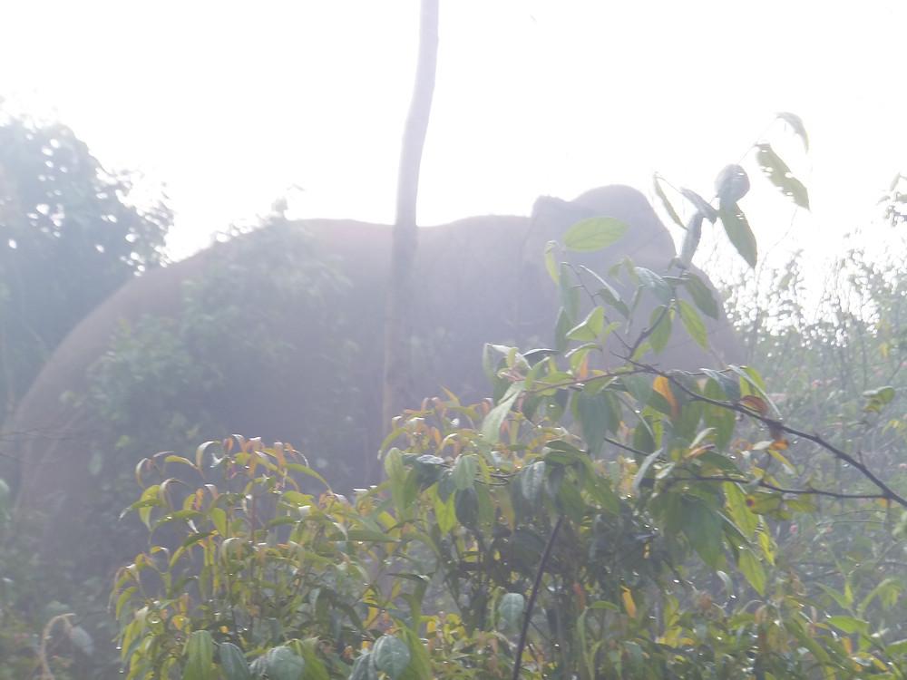 munnar wild elephant sighting