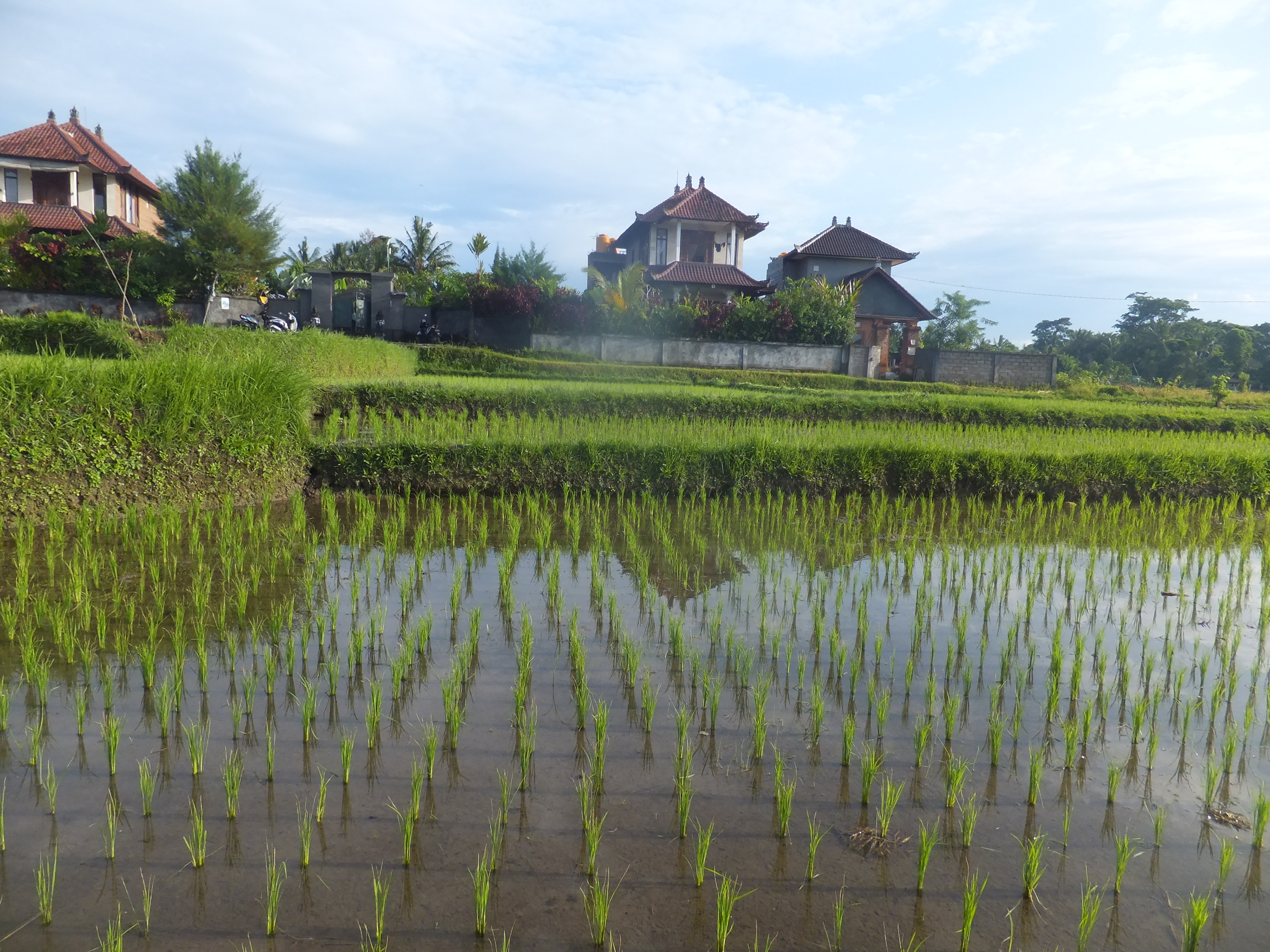 Bali Weather in February & March | Vegan Travel and