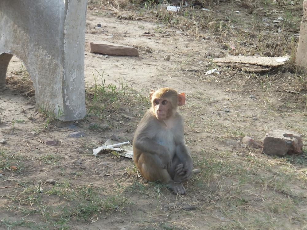 backpacking taj mahal india blog