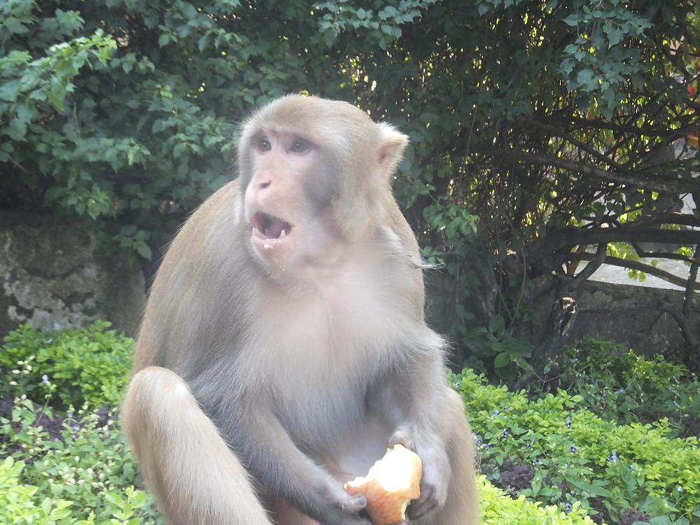 vegan backpacking monkey!
