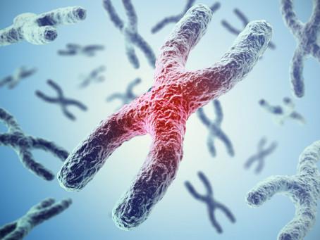 Una visión diferente de los cromosomas