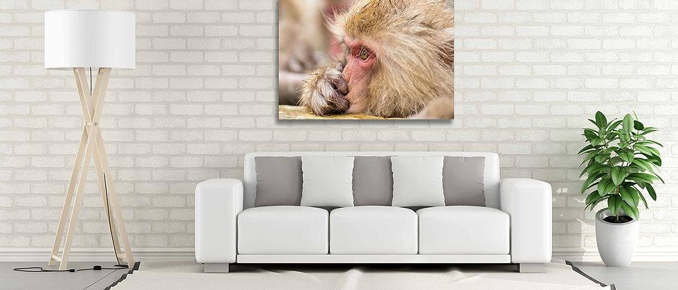 Silence Monkey