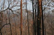 Jan 29 2020 Spotty gums burnt.JPG