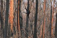 Jan 29 2020 burnt Spotty gums.