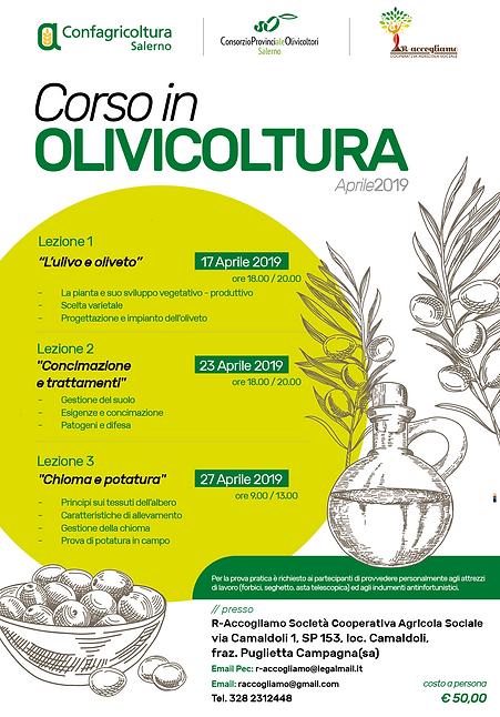 corso in olivicoltura