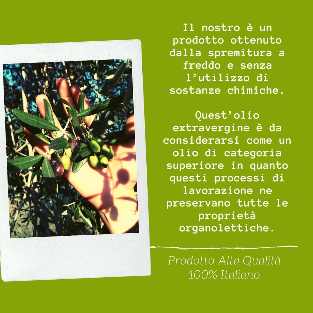 descrizione olio di oliva