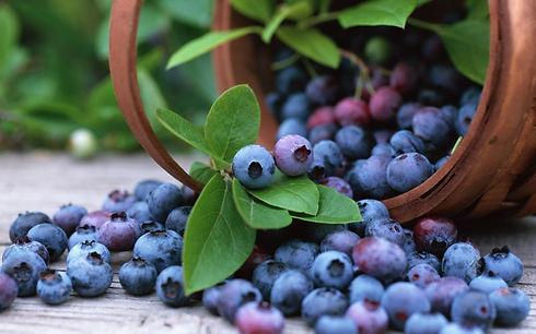 164083688-blueberry-wallpapers.jpg