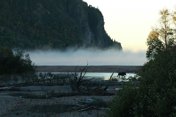 Old Woman Bay (with moose) 12 Dec.JPG