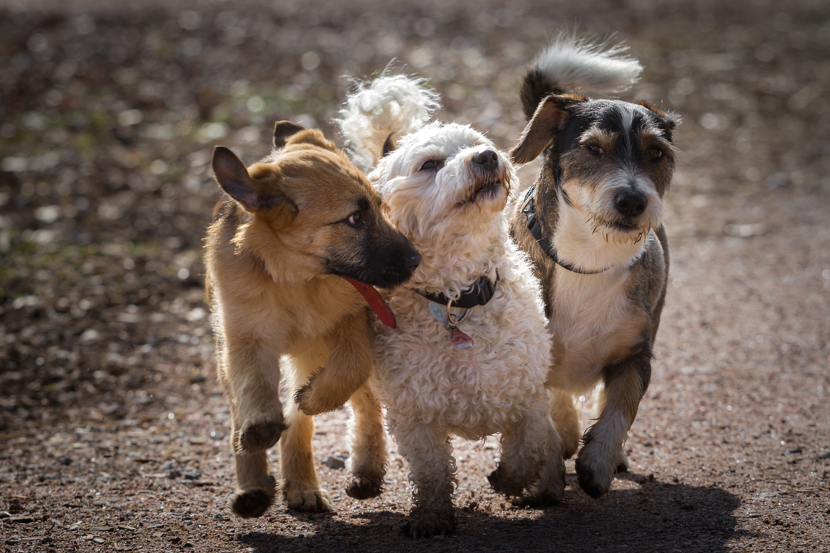 Four-legged Musketeers