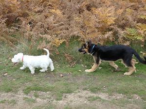 Dog walkers in Surbiton