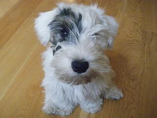 Puppy visits Surbion