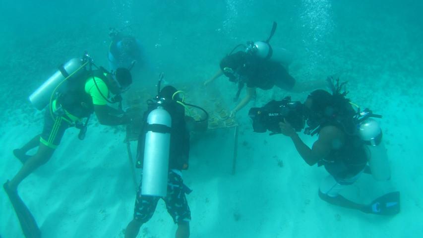 Elkhorn Divers at work
