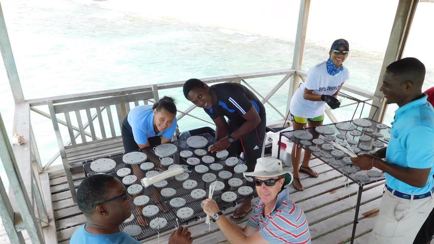 Coral restoration project