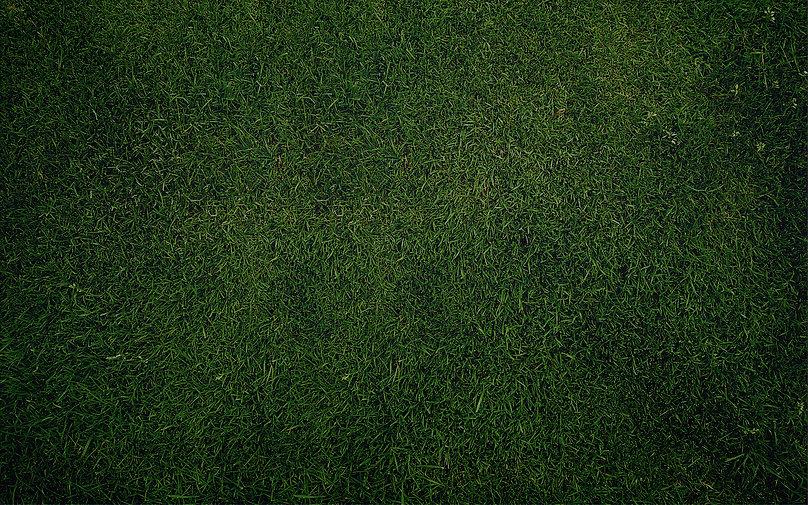 grass_texture597.jpg