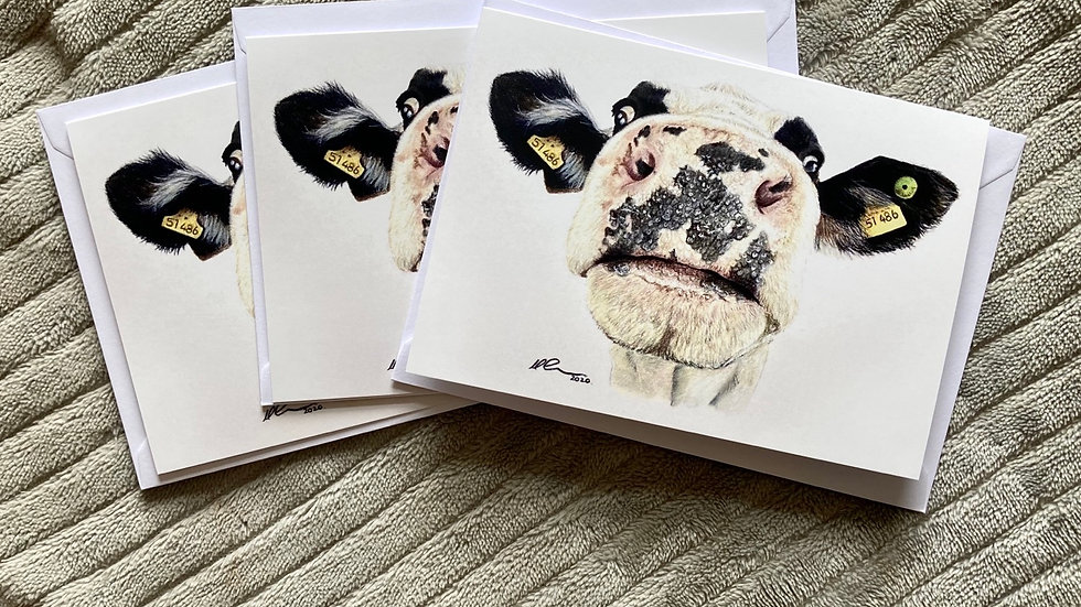 Nosy Cow - A6 greetings card