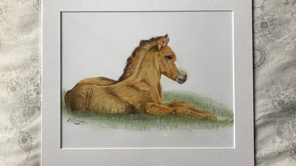Springtime Foal - original artwork