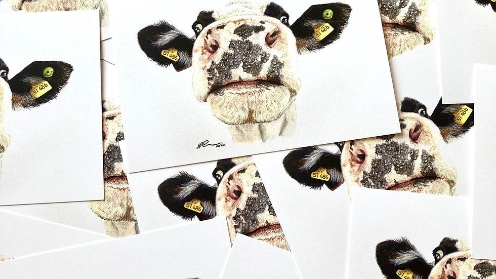 Nosy Cow - postcard