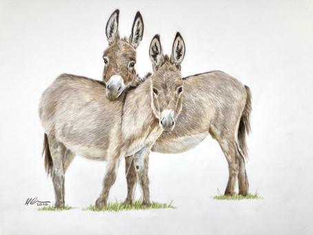 Donkeys and Brooke