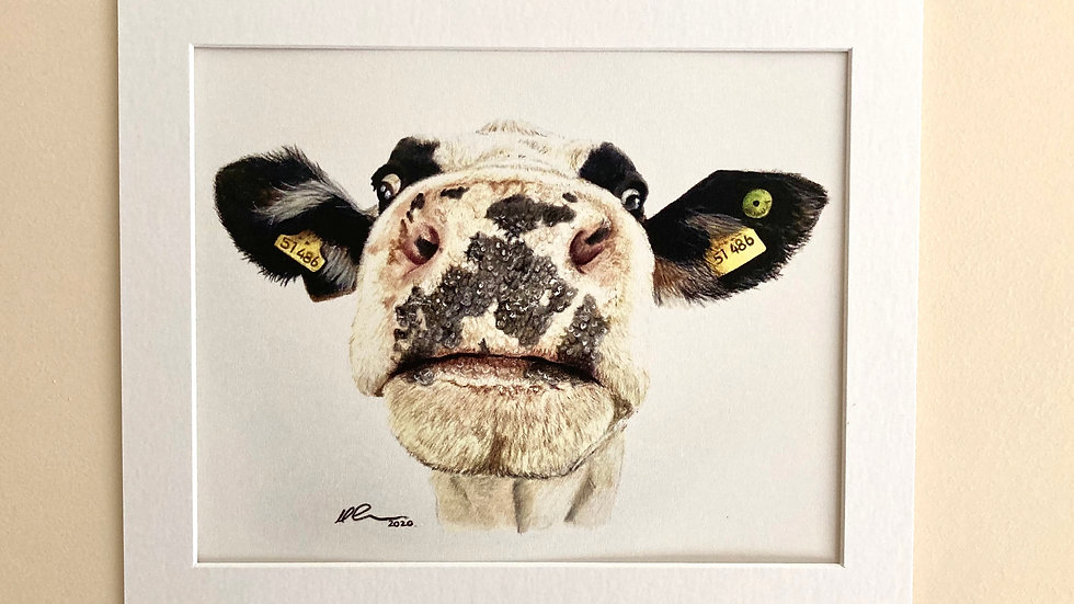 Nosy Cow - mounted print