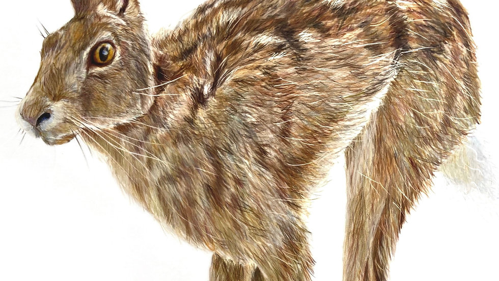 Running Hare - mounted Limited Edition print