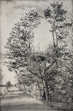 Tree in Fredonia_2020_Etching and aquati