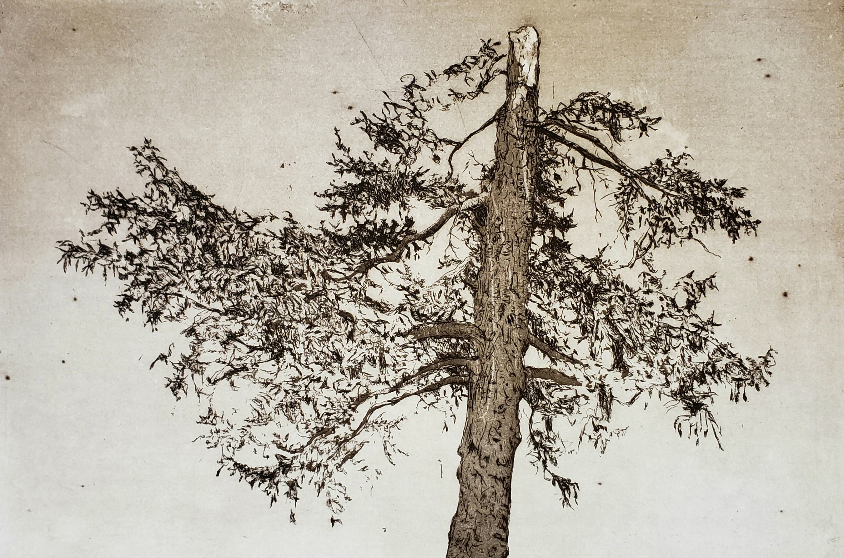 And Still It Grows_2019_Etching and aqua