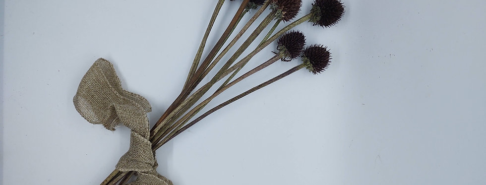 Echinacea seed pod