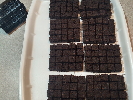 Growing seedlings with pre-made soil blocks.