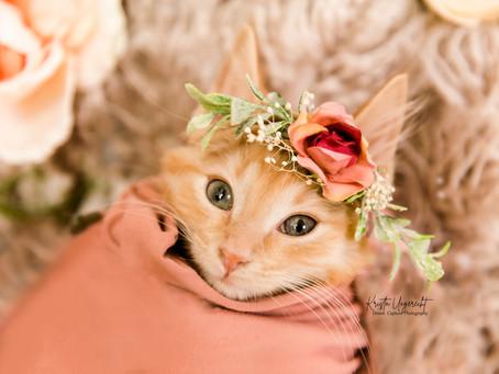 Kitten Newborn Style Session