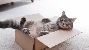 Produtos para gatos: Saiba quais usar