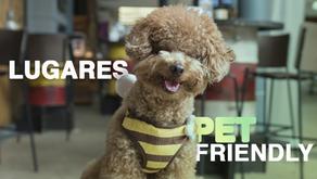 Você sabe o que é lugar Pet Friendly?