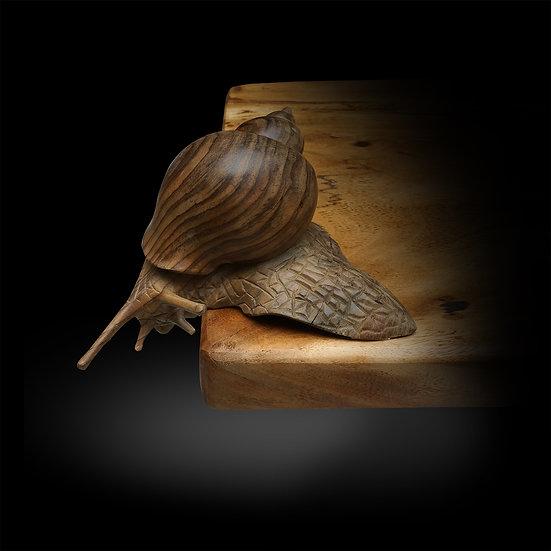 Sonokeling Snail