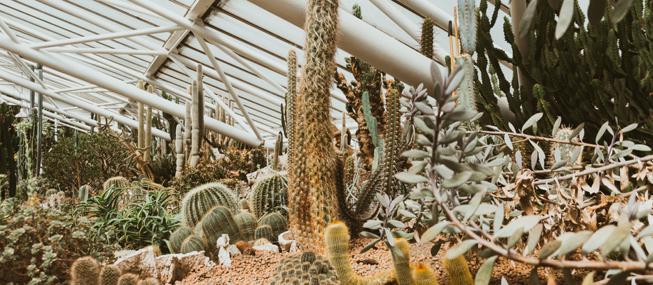 CACTI AND CONSTRUCTION