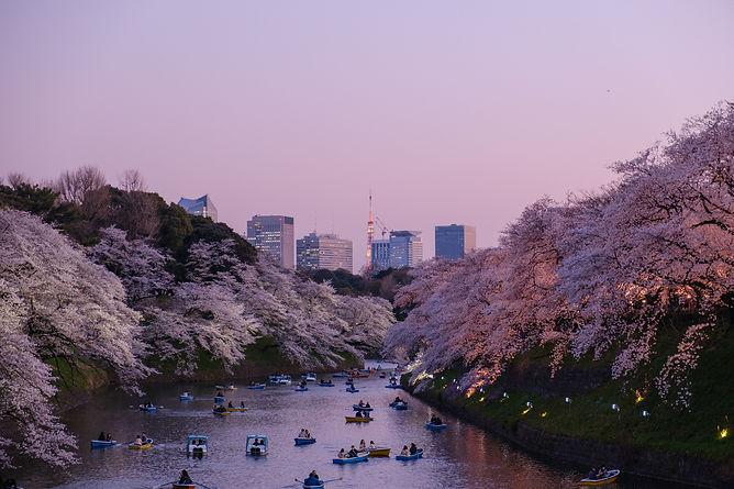 Cherry Tokyo.jpg