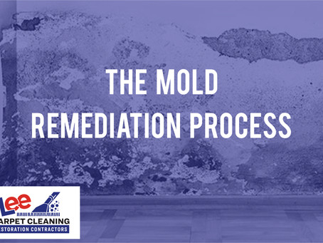 The Mold Remediation Process