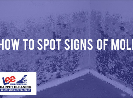 How to Spot Signs of Mold