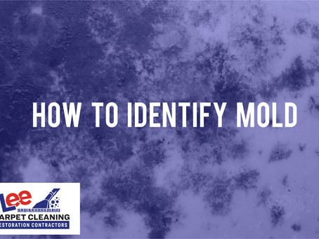 How to Identify Mold