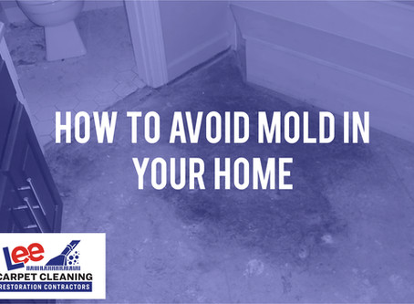 How to Avoid Mold in Your Home