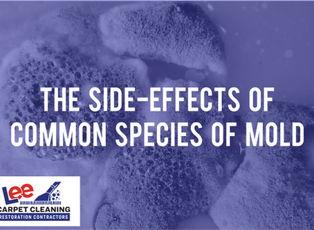 The Side-effects of Common Species of Mold