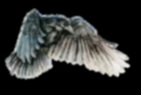 —Pngtree—vector raven_3233502.png