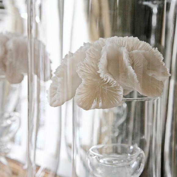 Paris - Coral On Glass
