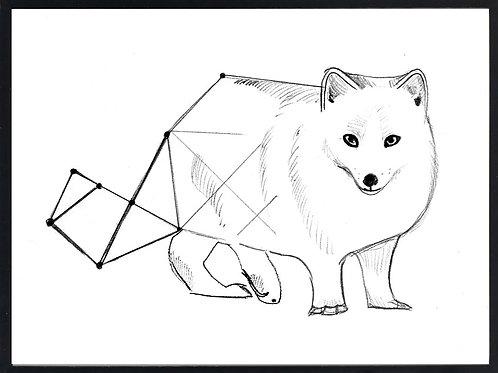 Geometrical arctic fox