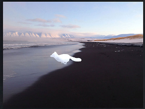 Photomontage Arctic Fox on the beach