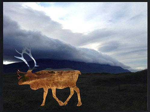 Photomontage Reindeer Tindastoll