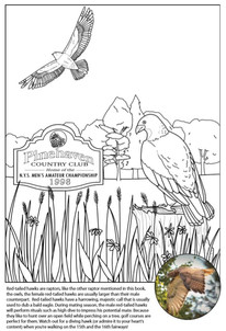 Custom Red Tail Hawk Coloring Page
